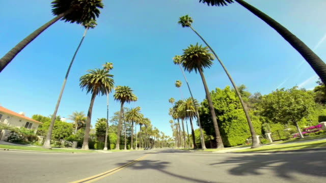 ws driving along palm tree-lined road - beverly hills stock videos & royalty-free footage