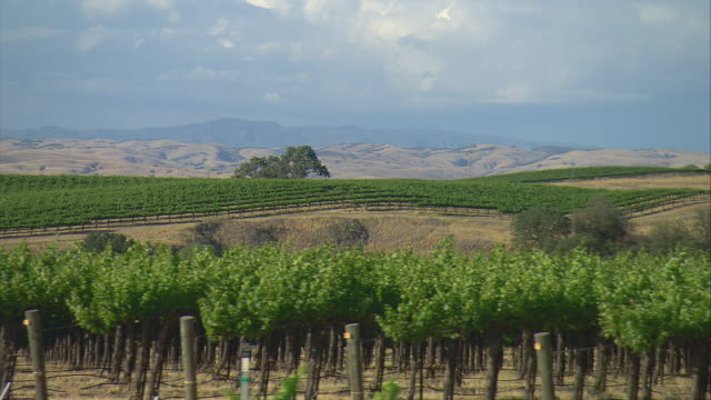 SIDE POV Driving along vineyard with mountains in background, Paso Robles, California, USA