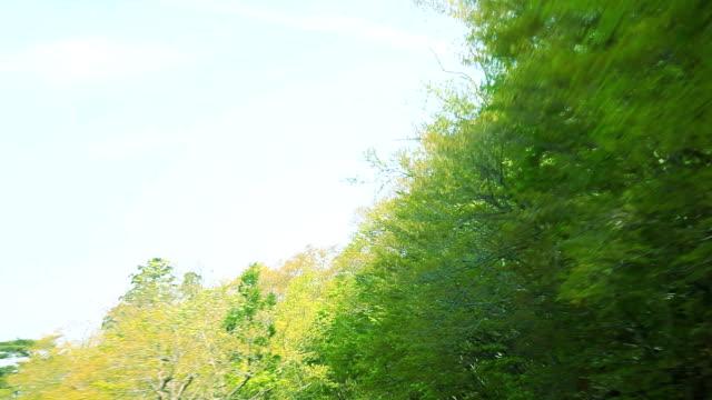 vídeos y material grabado en eventos de stock de conducción en verde road - plusphoto