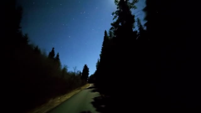 Driving at night under the stars and full moon through forest of fir tree silhouettes on empty road 1