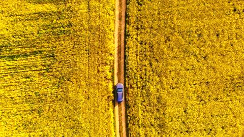vídeos y material grabado en eventos de stock de driving by car through beautiful yellow canola field seen from above in spain. - plano descripción física