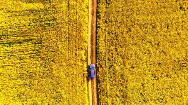 vídeos y material grabado en eventos de stock de driving by car through beautiful yellow canola field seen from above in spain. - escena rural