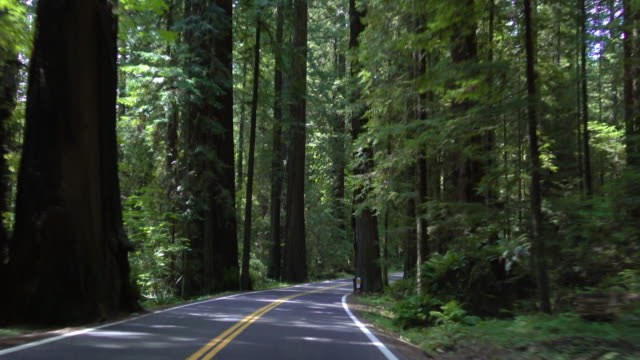 driving california's redwood forest - coast redwood stock videos & royalty-free footage