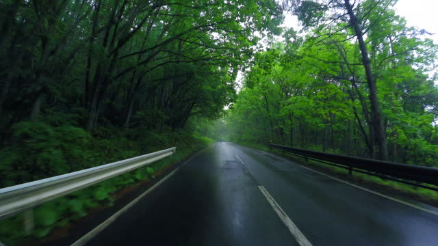 Driving Country Road in the rain forest