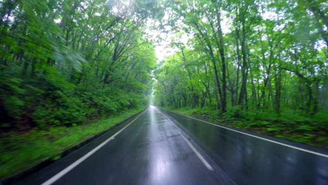 driving country road in the rain - moving down video stock e b–roll