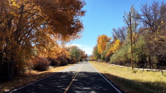 vídeos de stock e filmes b-roll de driving down a road in fall in colorado while a herd of deer cross the road on a sunny day - veado