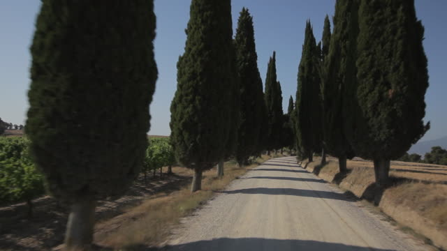 vídeos y material grabado en eventos de stock de car pov ws driving down dirt road lined with cypress trees / tuscany, italy - toscana