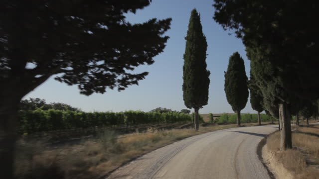 car pov ws driving down dirt road lined with cypress trees / tuscany, italy - 1970 stock-videos und b-roll-filmmaterial