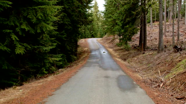 Driving down empty road car shot Wet Rainy Cascade Mountain Oregon Forest in Spring 2