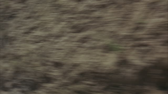 1965 REAR POV Driving down mountain road in Topanga Canyon / California, USA
