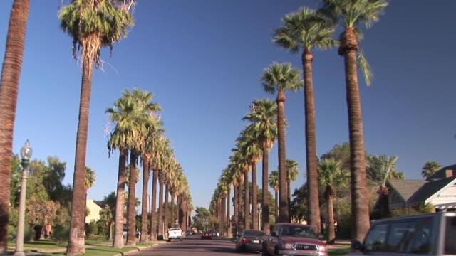 pov driving down palm lined street / phoenix, arizona, usa - arizona stock-videos und b-roll-filmmaterial