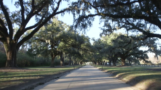 driving down tree lined road, rear pov - south carolina stock videos & royalty-free footage