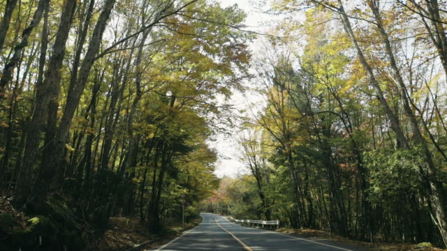 driving for the foliage in japan. - coniferous stock videos & royalty-free footage