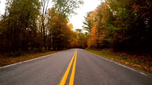 driving for the foliage in new england - tripping falling stock videos and b-roll footage