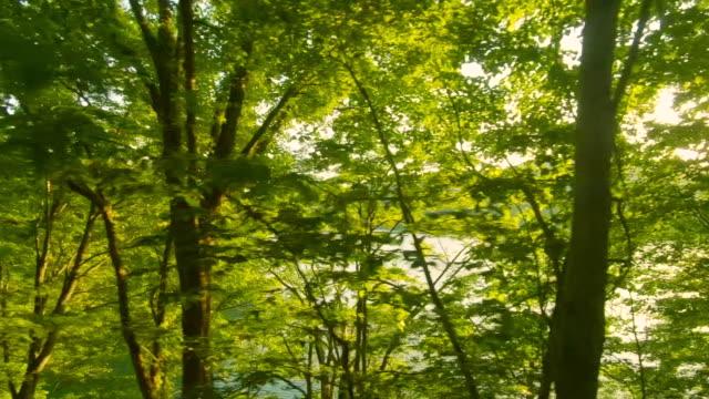 森林道路の運転 - 道ばた点の映像素材/bロール
