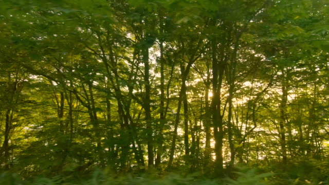 driving forest road - roadside stock videos & royalty-free footage