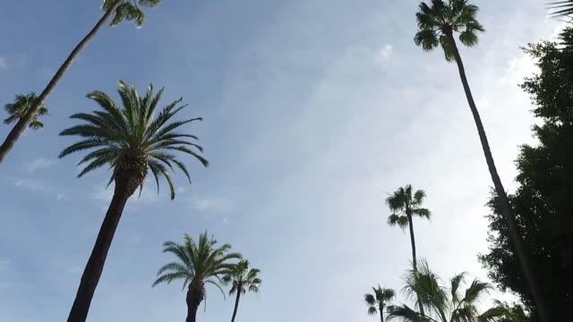 driving in los angeles city streets - palm tree stock videos & royalty-free footage