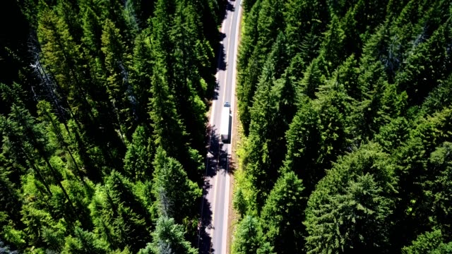 driving in the forest in the washington state - articulated lorry stock videos & royalty-free footage