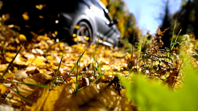 driving in the leaves in canada during fall - 4x4 video stock e b–roll