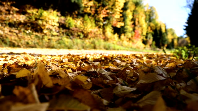 driving in the leaves in canada during fall - tripping falling stock videos and b-roll footage