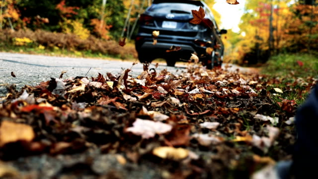 driving in the leaves in canada during fall - moving down video stock e b–roll
