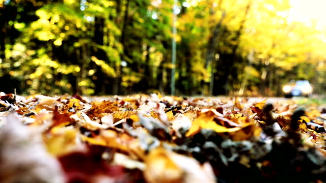 driving in the leaves in canada during fall - autumn stock videos & royalty-free footage