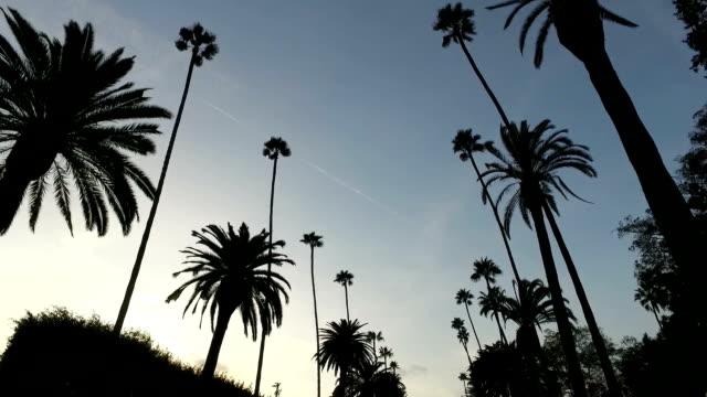 vídeos de stock e filmes b-roll de driving in la - palmeira