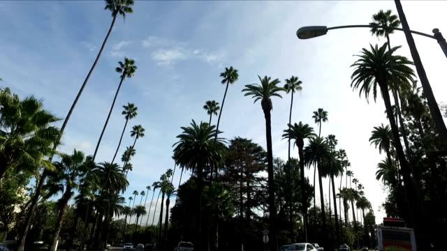 autofahren in la - von bäumen gesäumt stock-videos und b-roll-filmmaterial