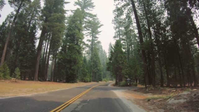 vídeos de stock e filmes b-roll de pov driving in yosemite national park during wildfire - perigo