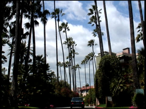 driving into tropical palm tree lined street - tropical tree stock videos & royalty-free footage