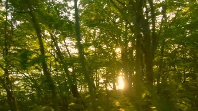 日没時に湖側道路を運転 - 道ばた点の映像素材/bロール