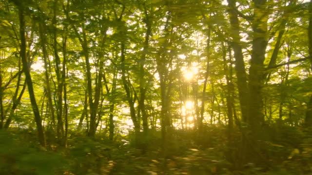 vídeos de stock, filmes e b-roll de conduzindo a estrada lateral do lago no por do sol - margem de estrada