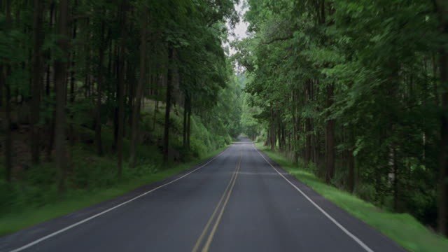 Driving on a highway through a lush forest.