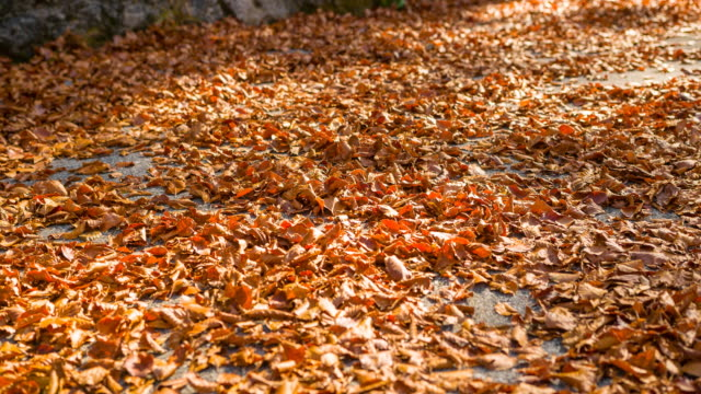 driving on a leaf covered road in autumn - covering stock videos and b-roll footage