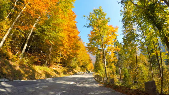 driving on a scenic mountain road through autumn forest - autumn leaf color stock videos and b-roll footage