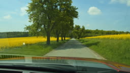 POV Driving on a tree lined road among canola fields