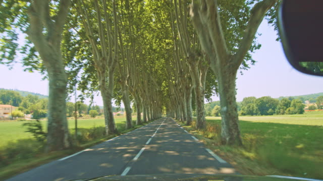 pov driving on a tree lined road - windscreen stock videos & royalty-free footage