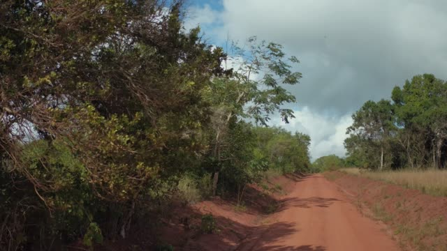 driving on dirt road in tsavo national park east - schotterstrecke stock-videos und b-roll-filmmaterial