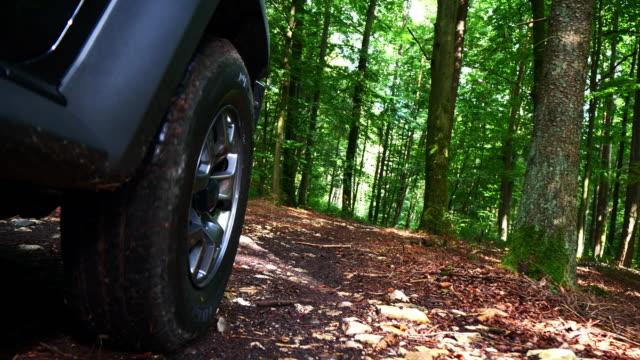夏の森道を走行 - 状態点の映像素材/bロール