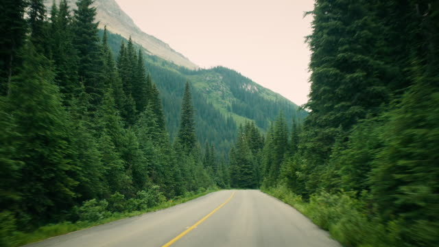 driving on icefields parkway through the forest - zweispurige strecke stock-videos und b-roll-filmmaterial