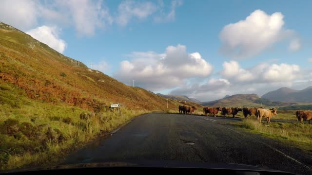 vidéos et rushes de driving on idyllic country road with blue sky and clouds, isle of skye, scotland - route à une voie