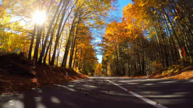 Driving on mountain road through colorful forest in fall