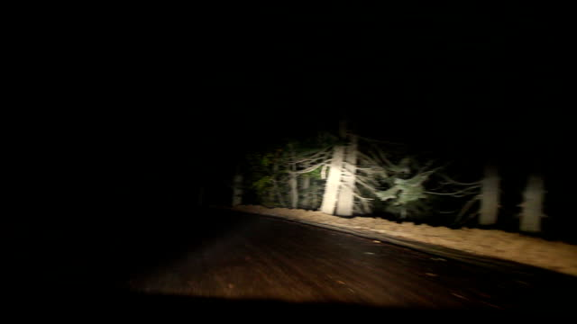 hd: driving on scary forest - headlight stock videos & royalty-free footage