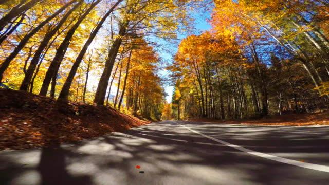 stockvideo's en b-roll-footage met rijden op de schilderachtige weg door herfst bos, de zon schijnt door kleurrijke bladeren - verwonderingsdrang