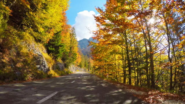 driving on scenic road through autumn forest, sun shining through colorful leaves - viaggio in macchina video stock e b–roll