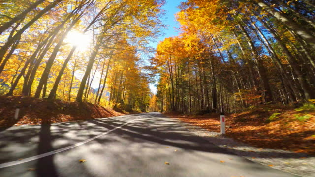 Driving on scenic road through autumn forest