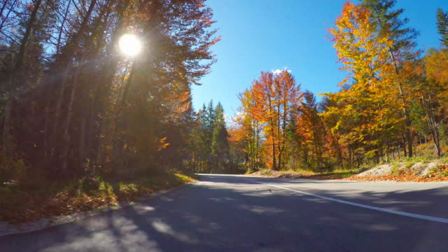 Driving on scenic road through colorful forest in autumn on beautiful sunny day