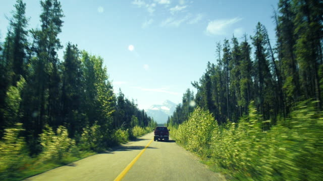 Driving on the icefields parkway through the forest in Canada