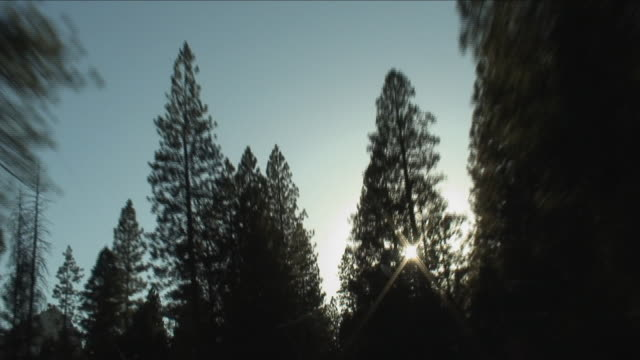 pov, la, driving on tree lined road, yosemite national park, california, usa - yosemite national park stock-videos und b-roll-filmmaterial
