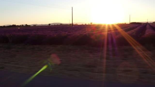 vidéos et rushes de coucher de soleil conduite passé champs de lavande or - voyage en voiture